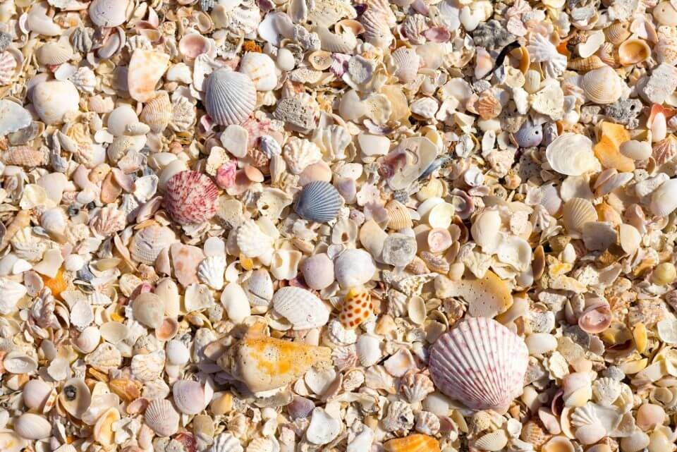 A bed of colorful seashells from Captiva Island