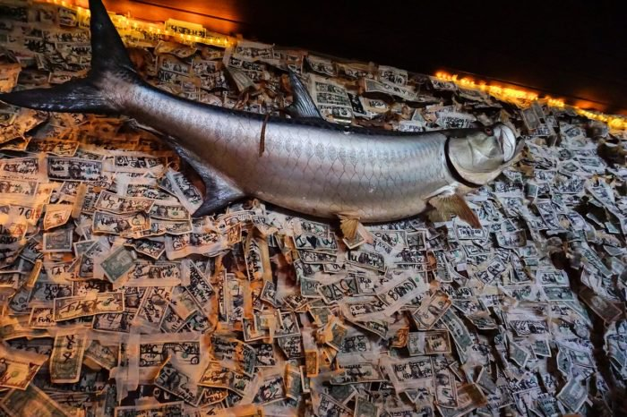 Thousands of one-dollar bills taped on walls with mounted tarpon
